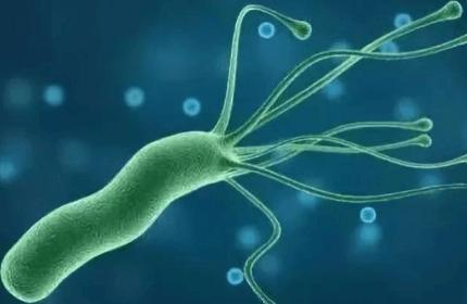 儿童感染幽门菌可怕吗?