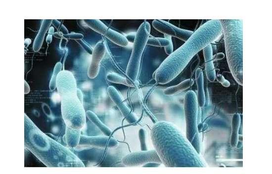 幽门杆菌是否传染