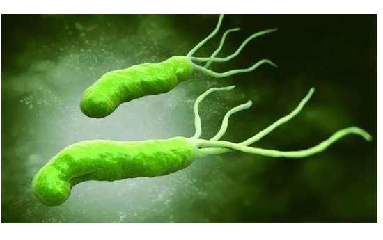 幽门螺杆菌对人的好处