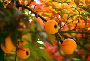 """扁桃体发炎""""克星"""",以下的水果你知道几种?"""