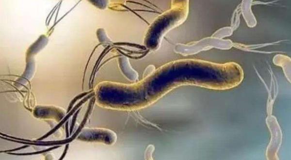 中医怎样治幽门螺杆菌
