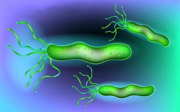 幽门螺杆菌三联疗法怎么吃(疗程为10-14天)